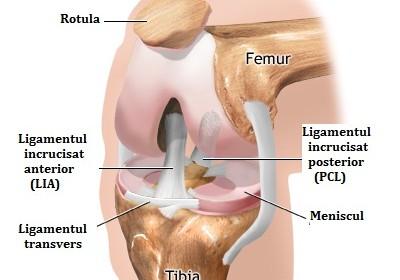 Artroscopia de genunchi   experttraining.ro